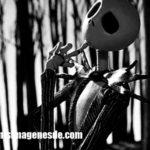Imágenes de Jack Skeleton