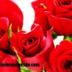 Imágenes de ramos de rosas rojas