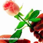 Imágenes de rosas de amor