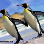 Imágenes de tipos de aves